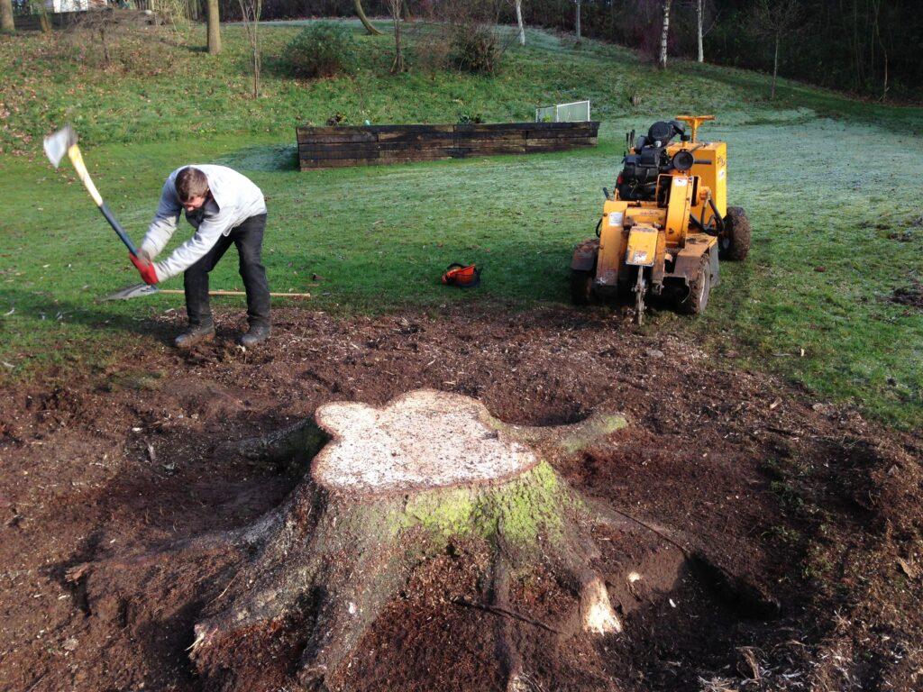stump service